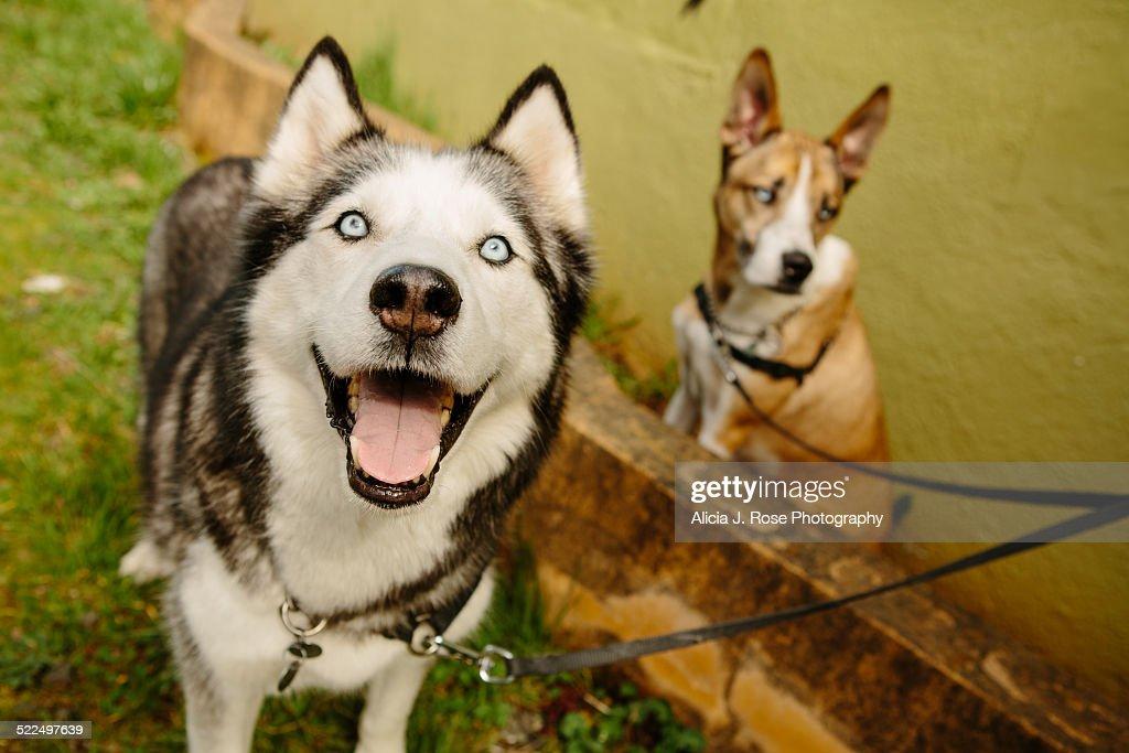 Shelter Dog Stories : News Photo