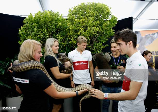 Marcus Ericsson of Sweden and Sauber F1 and Charles Leclerc of Monaco and Sauber F1 meet some Australian wildlife during previews ahead of the...