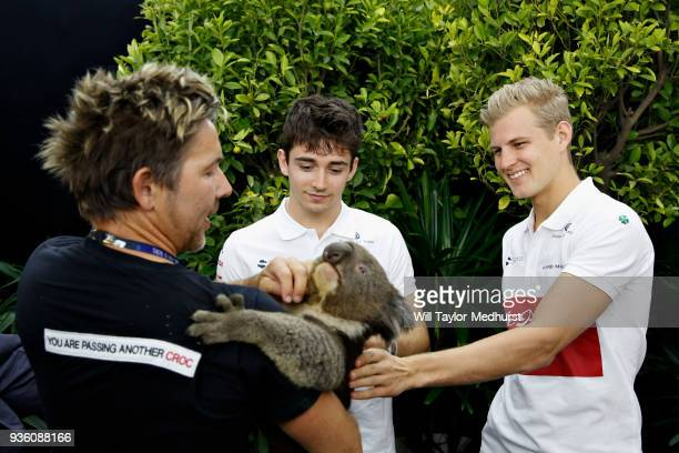 Marcus Ericsson of Sweden and Sauber F1 and Charles Leclerc of Monaco and Sauber F1 meet a koala during previews ahead of the Australian Formula One...