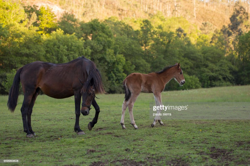 Mare and foal : Stock-Foto