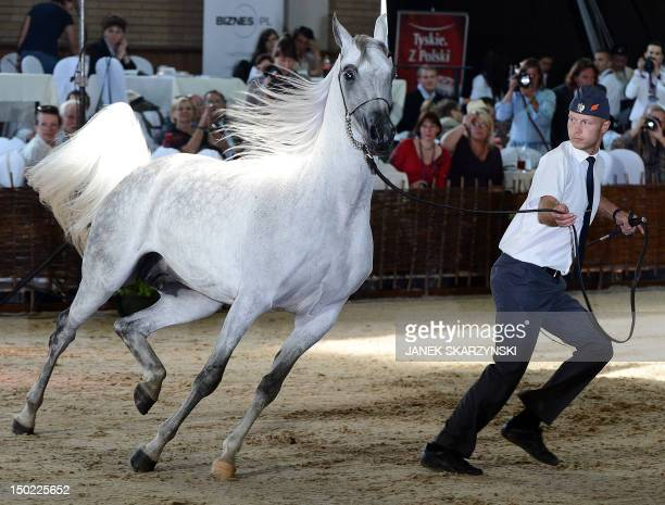 Mare Etnologia is displayed during Pride of Poland Arabian Horse sale in Janow Podlaski on August 122012 Etnologia was sold for 370 thousand Euros to...