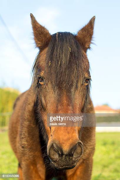 mare - ugly horses stock photos and pictures