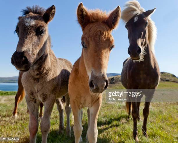 Mare with Foals