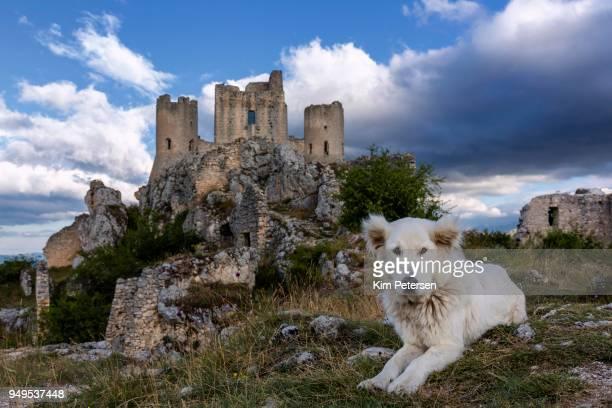 maremma sheepdog in front of rocca calascio, gran sasso, abruzzo, italy - pastore maremmano foto e immagini stock
