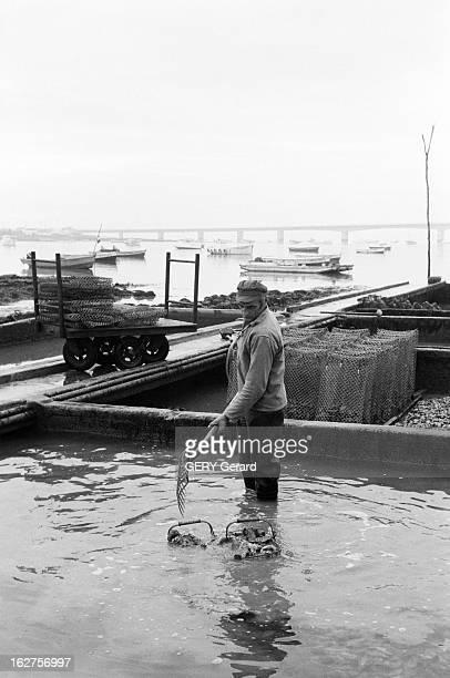 Marenne Oyster Farmers Defend Their Products France 14 janvier 1976 En Charente Maritime près de Marennes des éleveurs d'huitres organisent un...