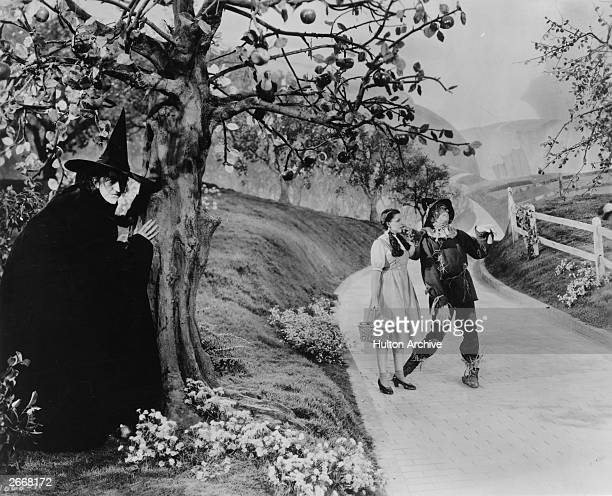 Margaret Hamilton as The Wicked Witch of the West hides behind a tree from Dorothy played by Judy Garland and the scarecrow as they make their way...