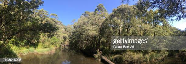margaret river in western australia - rafael ben ari bildbanksfoton och bilder