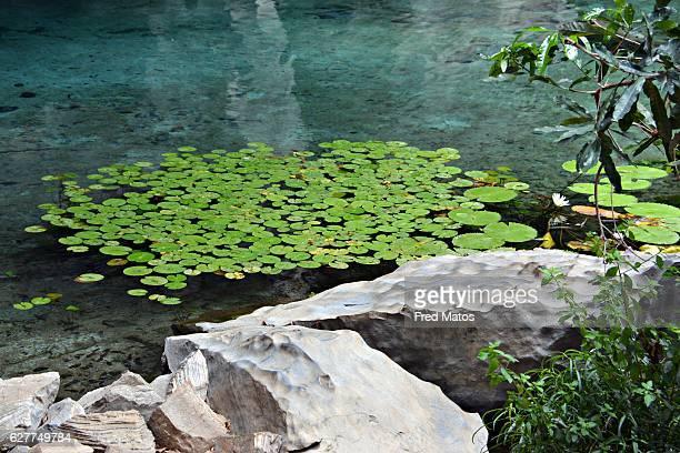Margin of a lake with aquatic plants in Chapada Diamantina, Bahia