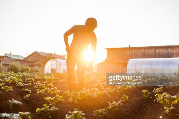 mari farmer tending to crops in rural field - trabalhador rural - fotografias e filmes do acervo