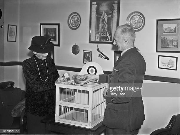 Maria Dickin founder of the People's Dispensary for Sick Animals veterinary charity presents RAF homing pigeon 'Winkie' with the Dickin medal 19th...