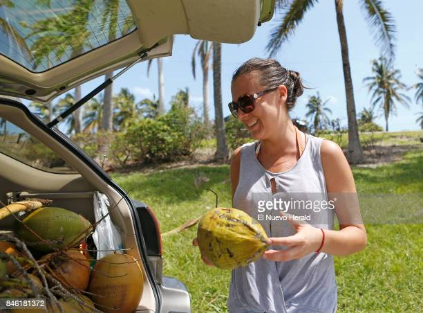 Maria Payor a North Miami Beach resident is collecting coconuts to share with her neighbors at Haulover Marina in the Hurricane Irma aftermath on...