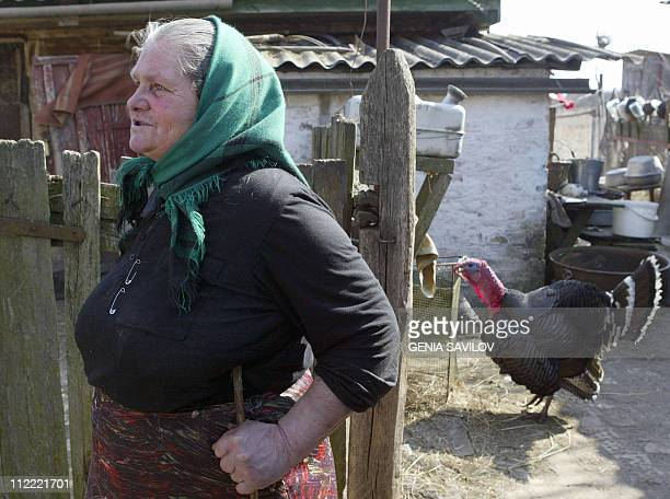 Maria Urupova 71 a residents in the village of Paryshiv stands near a turkey 11 April 2006 that has grown up in one of the world's most radioactive...