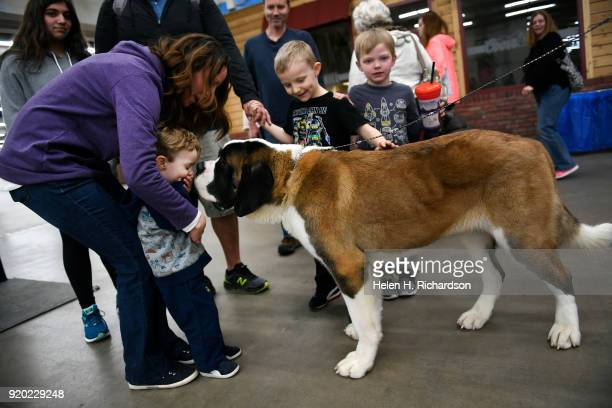 Mariah Atha and her son Cooper left enjoy getting close to Parry a 1 year old Saint Bernard during the Colorado Kennel Club Dog Show at the National...