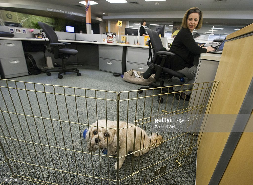 Bring Your Dog to Work : News Photo