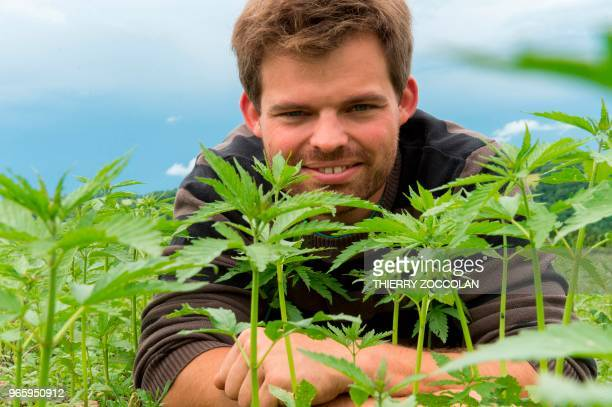 Marien Sablery an agricultor cultivating organic hemp on 25 hectares poses in his field in Evaux les Bains Creuse region on May 31 2018 Emmanuel...