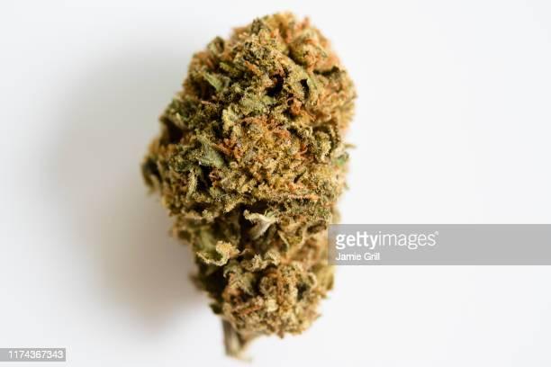 marijuana bud on white background - bud stock pictures, royalty-free photos & images