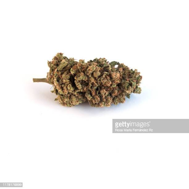 marijuana buds on white background with copy space. - bud stock pictures, royalty-free photos & images