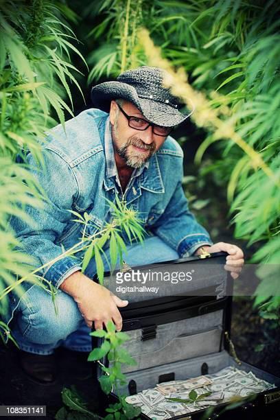 Marijuana Drug Dealer