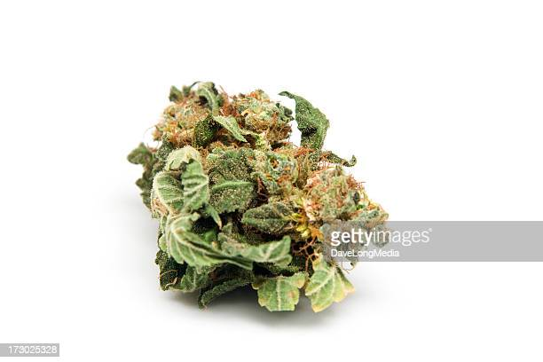 marijuana from holland - bud stock pictures, royalty-free photos & images