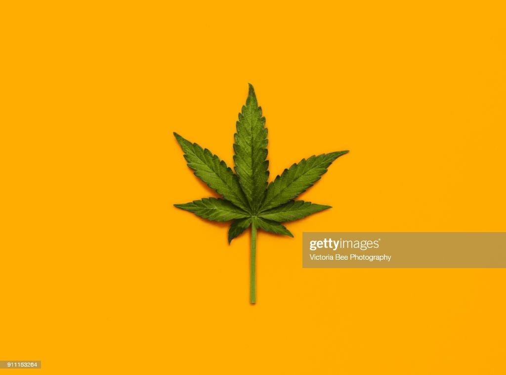 Marijuana Leaf over yellow background : Foto de stock