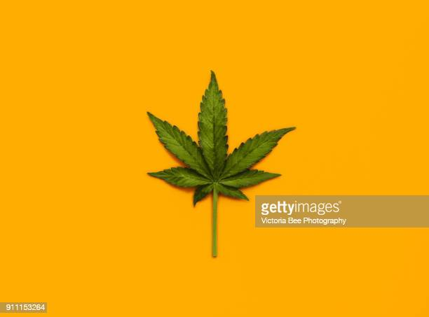marijuana leaf over yellow background - bud stock pictures, royalty-free photos & images