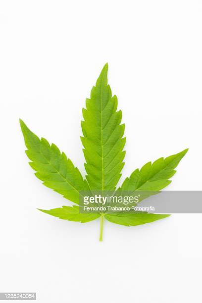 marijuana leaf - marijuana leaf stock pictures, royalty-free photos & images