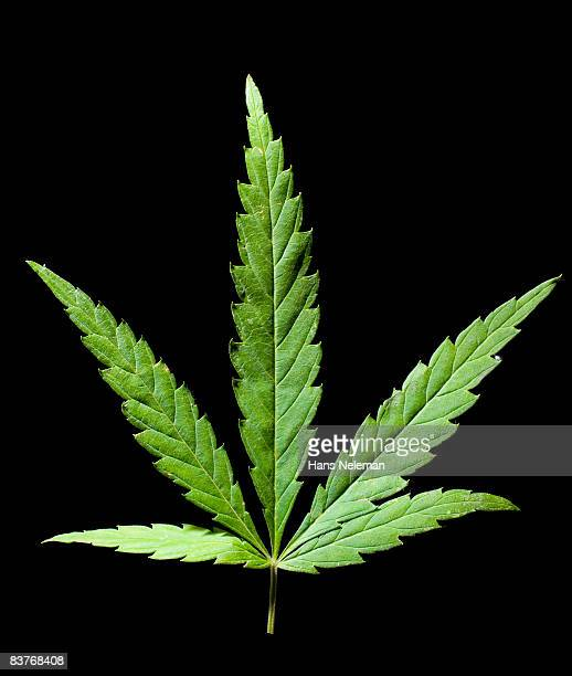 marijuana leaf - weed stock photos and pictures