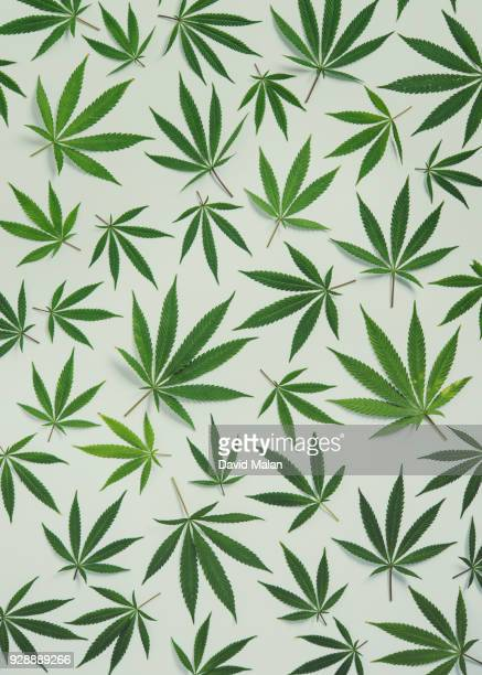marijuana leaves forming a pattern.