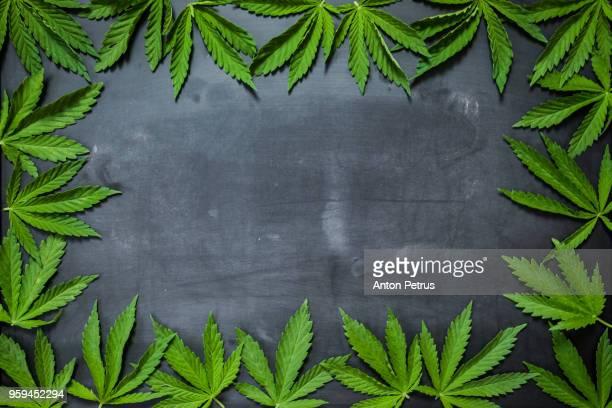 Marijuana leaves on a blackboard. Background concept