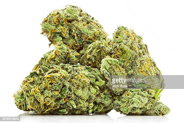 marijuana macro on white with reflection - weed stock photos and pictures