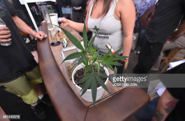 A marijuana plant is seen at the first annual DOPE Cup a cannabis competition in Portland Oregon on October 4 2015 As of October 1 2015 a limited...