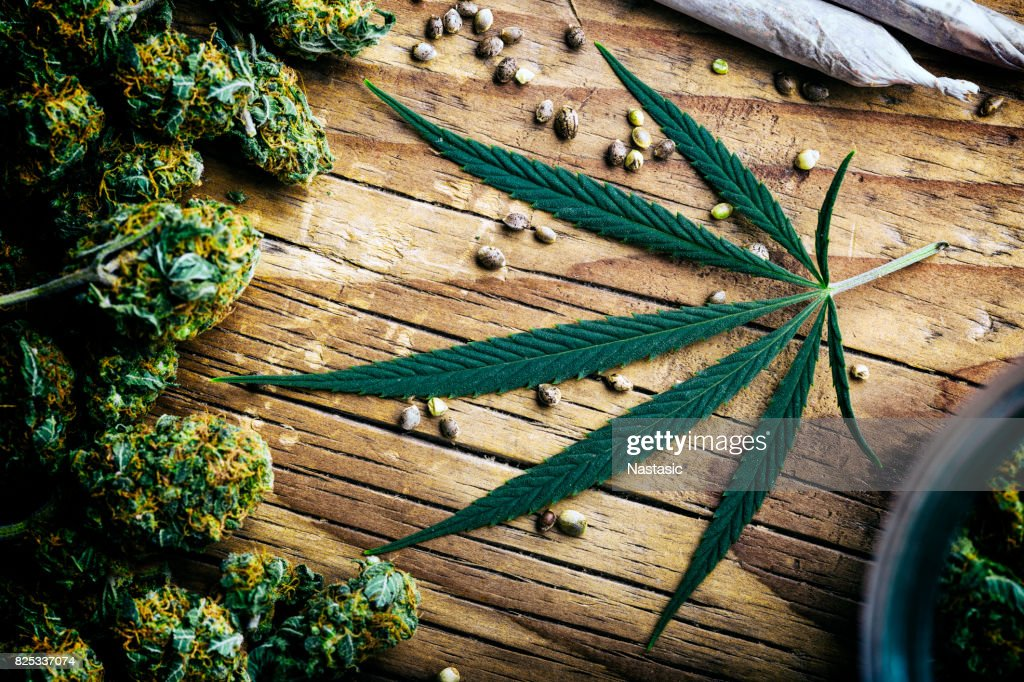Marihuana planta muerta : Foto de stock