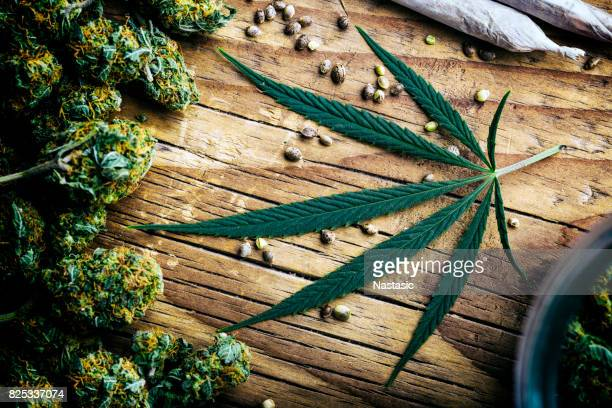 marijuana plant still life - cannabis plant stock photos and pictures