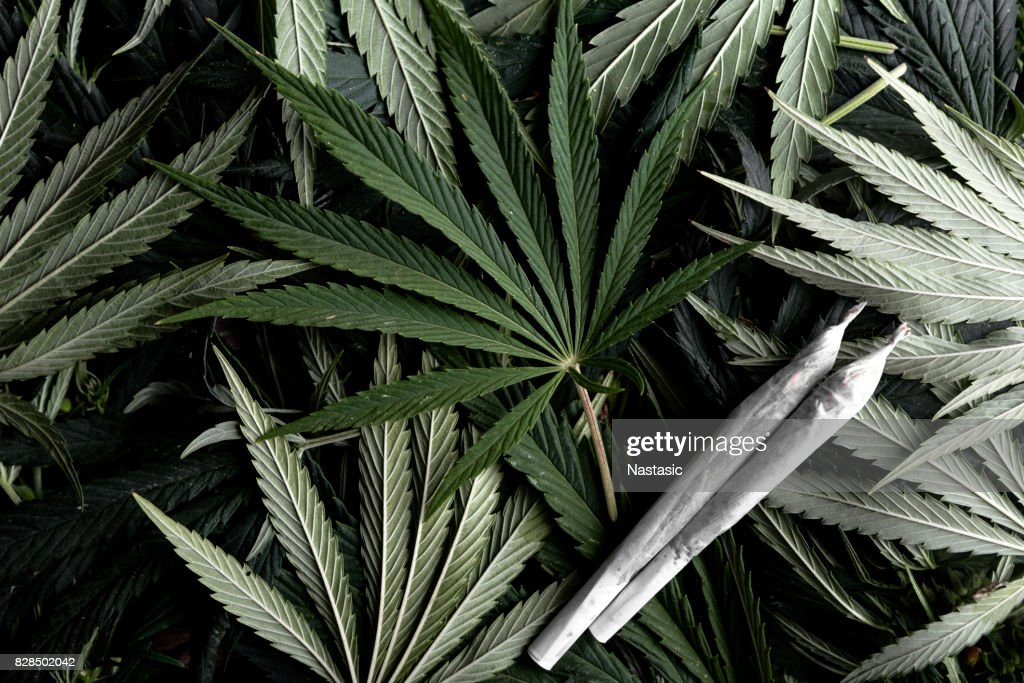 Marijuana plant with joints : Stock Photo