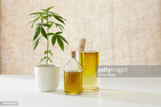 marijuana plant with natural remedies - cannabis oil stock photos and pictures