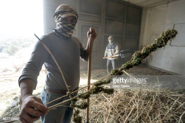 A marijuana processing warehouse in the Beqaa Valley in eastern Lebanon on November 1 2015 Marijuana is grown openly in many areas of this 75 mile...