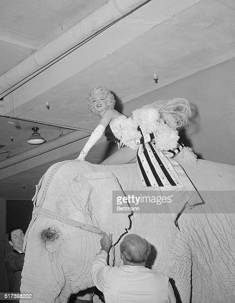 """Marilyn Monroe, dressed in circus finery, is shown aloft """"Kinardy"""", an Indian Jumbo, who was painted pink for the grand march as the Circus bowed at..."""