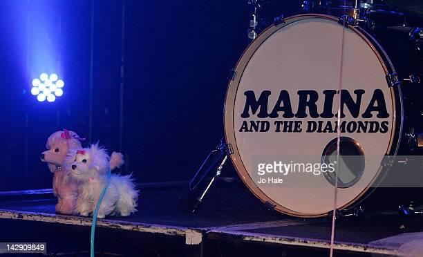 Marina Lambrini Diamandis toy dogs of Marina The Diamonds on stage at Heaven on April 14 2012 in London United Kingdom