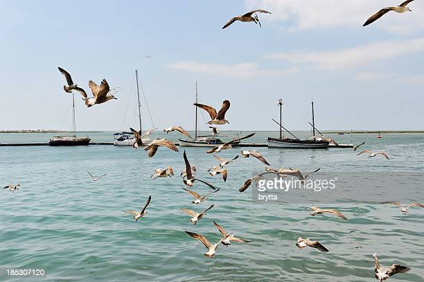 marina with seagulls in olhão, algarve,portugal - faro district portugal stock pictures, royalty-free photos & images