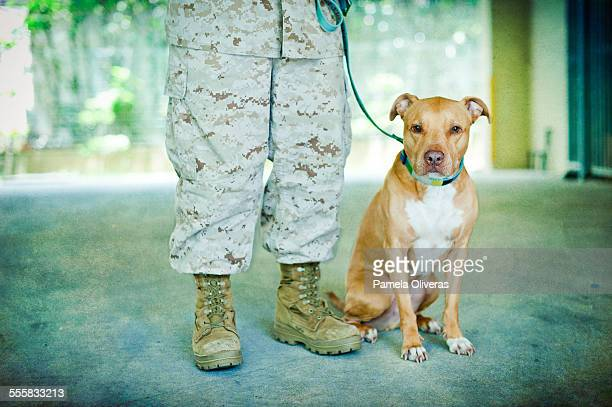 marine and pitbull - american pit bull terrier stock pictures, royalty-free photos & images