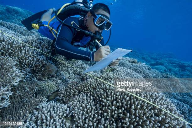 Marine biologist inspects any signs of the appearance of bleaching of coral during a dive on Tubbataha reef on April 23, 2018 off the Philippines,...