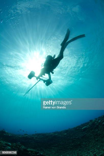 marine biologist - biologist stock pictures, royalty-free photos & images