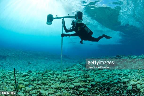 海洋生物学者