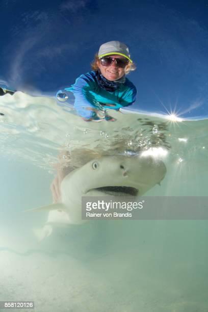 marine biologist releases shark