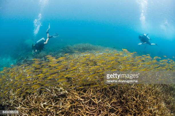 Marine biologists taking data from coral reefs among school of fishes