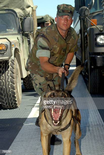 Marine Corps military policeman Lcpl Darrin L Johnson works with his partner Cchyna a patrol explosives dog conducting vehicle searches aboard a yard...