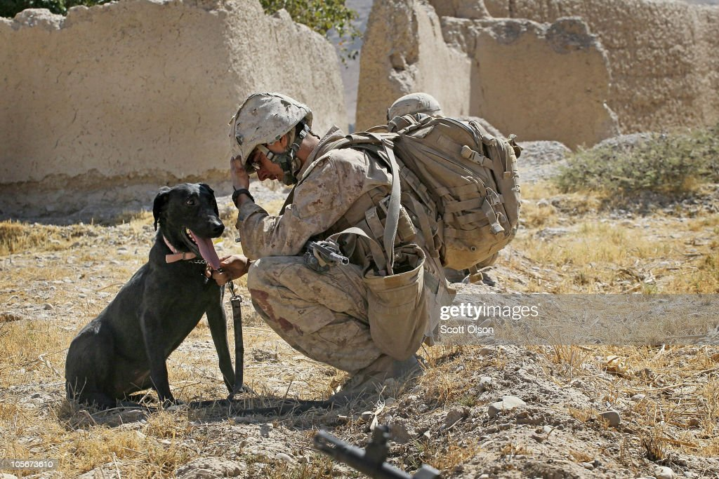 Marine Cpl. Jonathan Eckert of Oak Lawn, Illinois, attached to India Battery, 3rd Battalion, 12th Marine Regiment sits with his improvised explosive device (IED) sniffing dog Bee as he tries to cope with the death of a fellow Marine while waiting for a MEDEVAC helicopter to pick up the Marine's remains during a patrol near Forward Operating Base (FOB) Zeebrugge on October 17, 2010 in Kajaki, Afghanistan. Eckert was checking for IEDs with Cpl. Jorge Villarreal of San Antonio, Texas in advance of a small group of Marines when Villarreal stepped on an IED pressure plate and was killed. The Marines of India Battery, 3rd Battalion, 12th Marine Regiment are responsible for securing the area near the Kajaki Damn on the Helmand River.