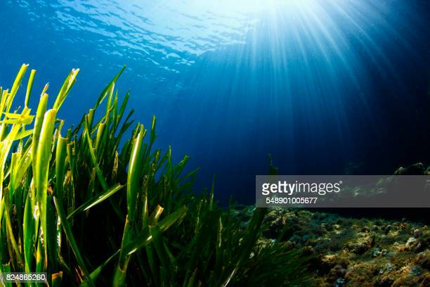 marine ecosystem - ocean floor stock pictures, royalty-free photos & images