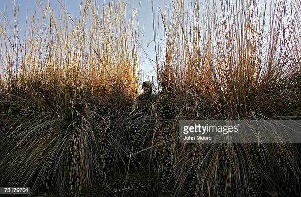S Marine finds a way through the tall grass on the bank of the Euphrates River February 2 2007 in Ramadi Anbar Pronvince Iraq Members of the Marine...