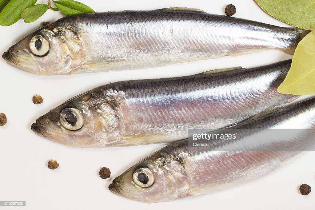 Marine fish herring on a white background : Stock Photo